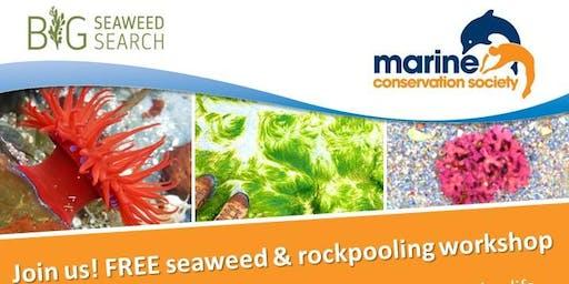 Rockpooling and seaweed  workshop