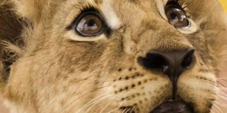 Curso Pequeño Etólogo de Grandes Felinos