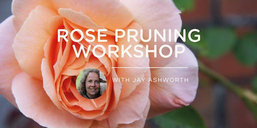 ROSE PRUNING WORKSHOP 2020 with Jay Ashworth