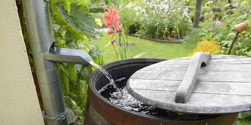 Slow the Flow with Rain Gardens and Rain Barrels