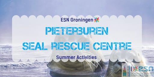 Summer activities: Pieterburen seal rescue centre