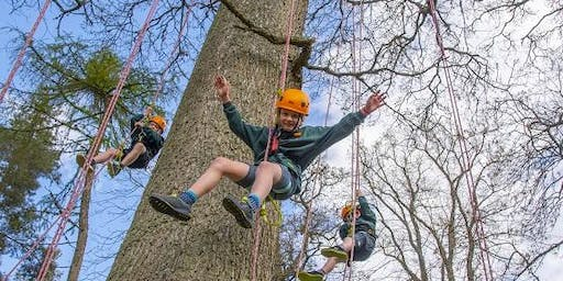 THE BIG TREE CLIMB