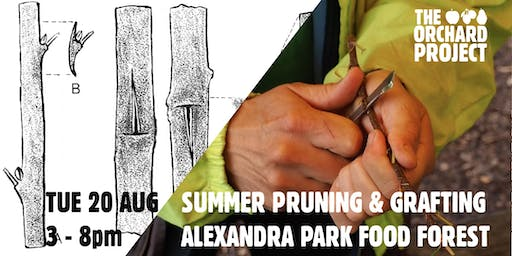 Summer pruning and bud grafting masterclass (Glasgow)