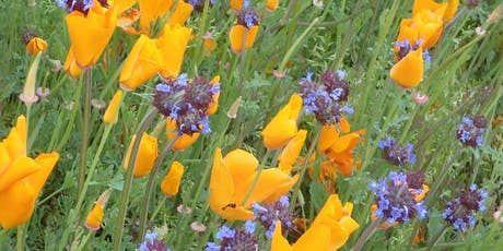Nature Gardening Series • Rare Places & Rare Plants in Orange County with Ron Vanderhoff  tickets