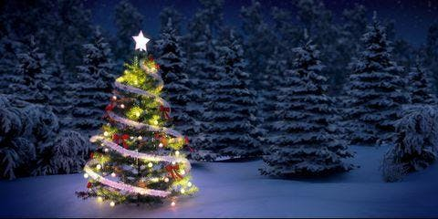 WCC Christmas Preview Dinner (click here for details)