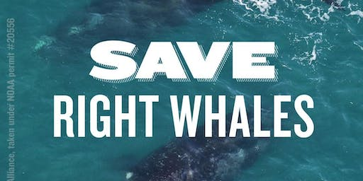 Raise Your Voice: Protect North Atlantic Right Whales