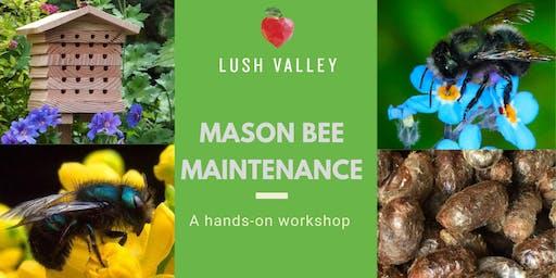 Mason Bee Maintenance
