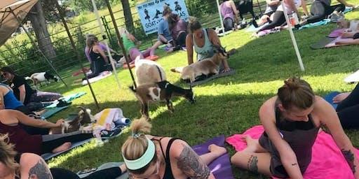 Goat Yoga Texas - Brunch'n Goats! - Sun., Sept. 15 @ 11AM