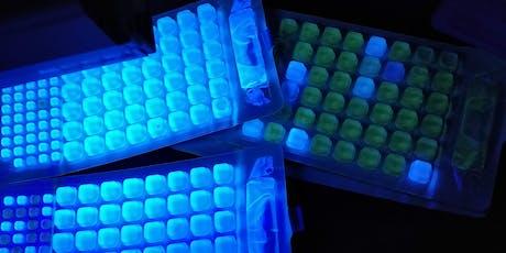 Lab Training for Teachers: Enterococcus Testing - Part 1 tickets