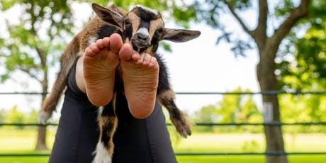 Goat Yoga Texas - Sun, Sept 22 @ 10:30AM tickets