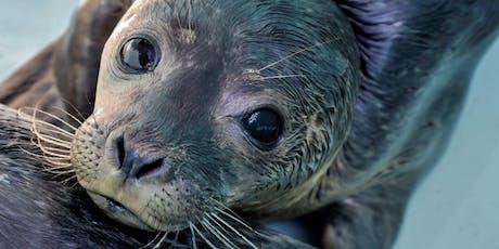 Mystic Aquarium's Ocean Ambassador Coastal Cleanup at Byram Park tickets