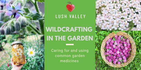 Wildcrafting in the Garden: Growing and Using Common Garden Medicines tickets