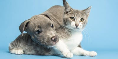 Arizona Humane Society Foster Open House