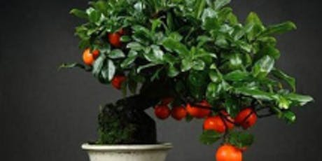 Milw. Bonsai Society 49th Annual Exhibit Workshops/Banquet tickets