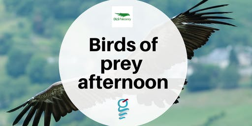 Birds of prey afternoon