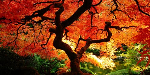 Meditation Meet-Up  Topic: The Autumn of The Tree of Life