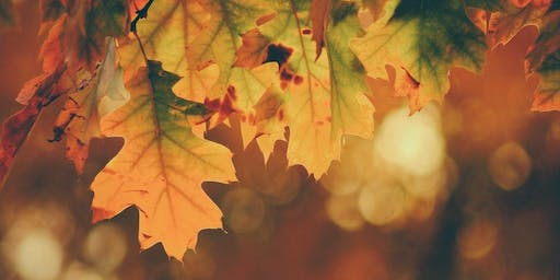 Meditation Meet-Up  Topic: Fall Colors Meditation