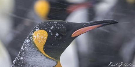 WPS Lecture: Paul Goldstein: Wildlife and travel in Kenya and Antartica tickets