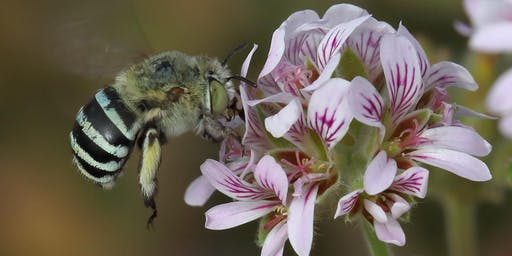 Insect Pollination of Coastal Plants with Jenna Draper