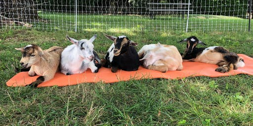 Sweeney Hill Farm Goat Yoga - August 24