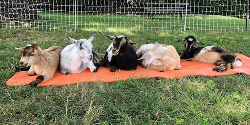 Sweeney Hill Farm Goat Yoga - August 31