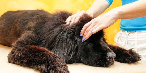 A Healing Touch Dog Massage (Large Dog Session)