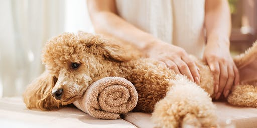 A Healing Touch Dog Massage (Medium Dog Session)