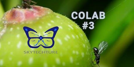 COLAB #3 = Innovar x Fruta x Miel x Polinizadores boletos