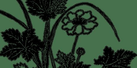 Wildflower Drawing Workshops - Mingenew tickets