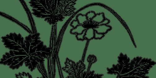 Wildflower Drawing Workshops - Mingenew