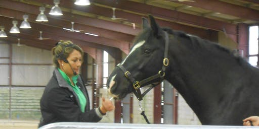 Understanding Horses. 2 Day Equine Behaviour and Training workshop.