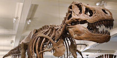 Kids Russian Tour at the Museum of Natural History (Dinosaurs) for 4 to 8 years olds.Тур для детей на русском языке.