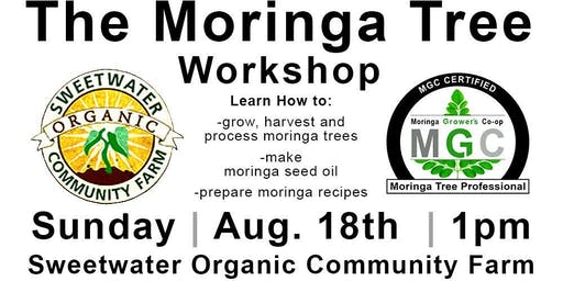 The Moringa Tree Workshop