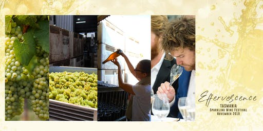From Vineyard to the Bottle, the art of making and tasting sparkling wines