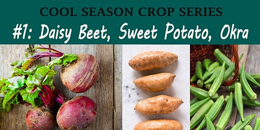 Daisy, Beet, Sweet Potato, Okra Crop Families (Cool Season Crop Family Course)