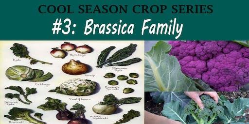 Brassica Family (Cool Season Crop Series)