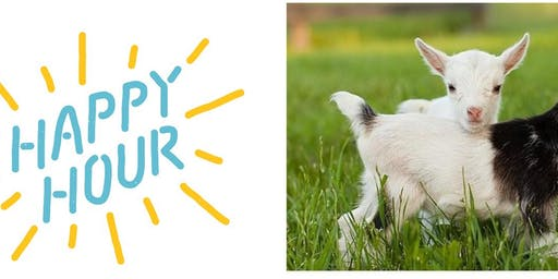 Baby Goat Happy Hour!