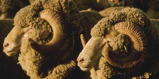 Stockbook Precision Sheep Management Workshop - Wagga Wagga