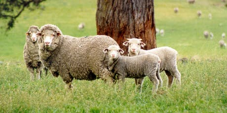Stockbook Precision Sheep Management Workshop - Forbes tickets
