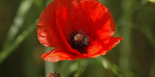 Community Learning - Creative Crafts - Make your own Poppy - West Bridgford Library