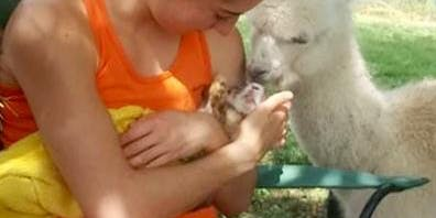 Baby Goats Snuggle for Labor Day Weekend with Live Music