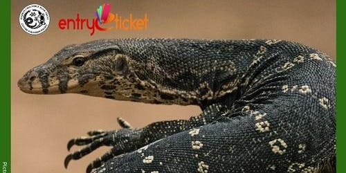 Know Your Reptiles! - Entryeticket