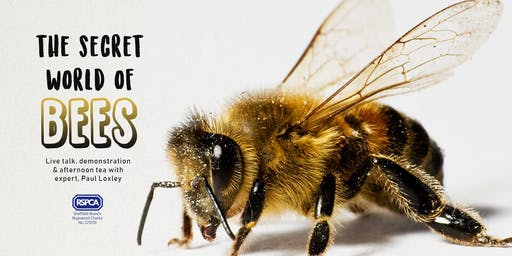 RSPCA Sheffield: The Secret World of Bees!