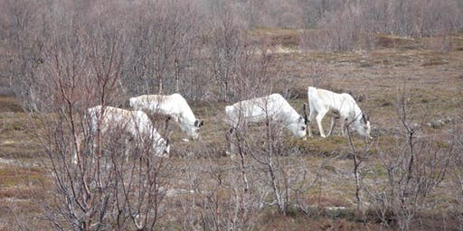 Podiumsdiskussion mit norwegischen Sami-Vertretern