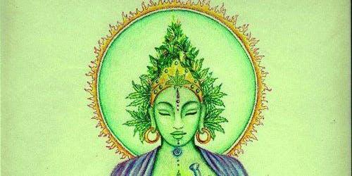 Sacred Plant Ceremony
