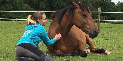 FREE Workshop for the anxious horse rider