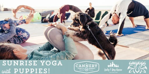 Sunrise Yoga with Puppies