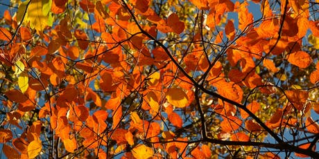 Late Summer Color Walk tickets