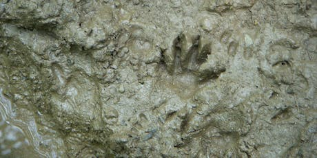 Adults, Paws to Ponder: Land Mammal Tales and Tracks tickets