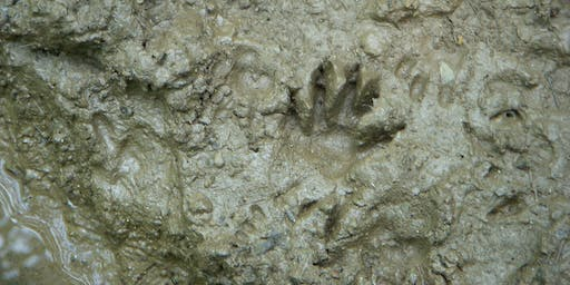 Adults, Paws to Ponder: Land Mammal Tales and Tracks
